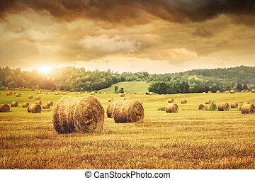 красивая, поле, сено, закат солнца, freshly, bales