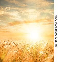 красивая, пшеница, field.
