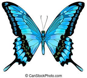 красивая, синий, вектор, бабочка, isolated