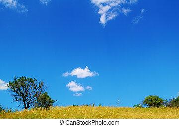 красивая, синий, над, небо, trees, поле, желтый