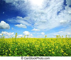красивая, синий, небо, поле, рапсовое, под, цветение