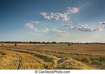 красивая, синий, пшеница, собирали, небо, поле, сено, newly, bales, пейзаж