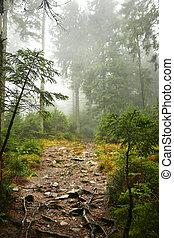 красивая, туман, лес, сильный