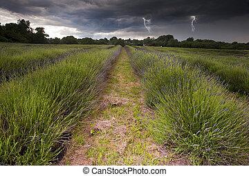 красивая, lightening, clouds, bolts, сельская местность, поля, образ, лаванда, драматичный, буря, вибрирующий, над, пейзаж, капризный