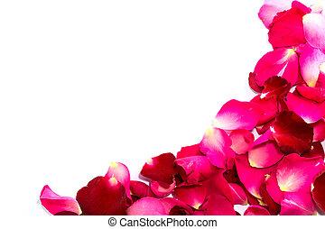 красивая, petals, красный, roses