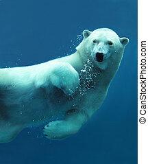 крупный план, подводный, полярный, медведь