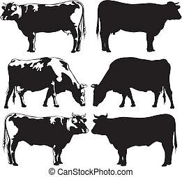 крупный рогатый скот, -, корова, бык