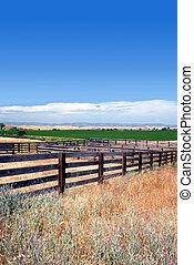 крупный рогатый скот, corrals, лето