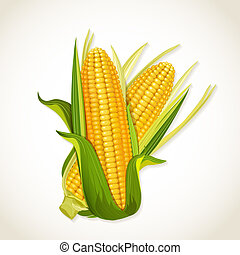 кукуруза, глыба, созревший