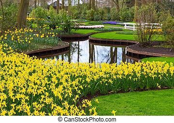 кумба, весна, бледно-желтый, желтый, blooming, цветы