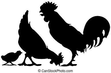 курица, семья