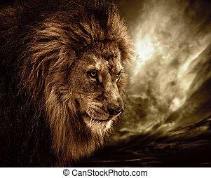 лев, штормовой, небо, против