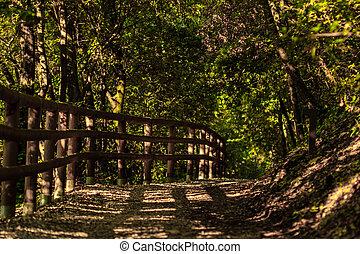 лес, дорога, утро