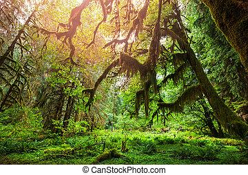 лес, зеленый