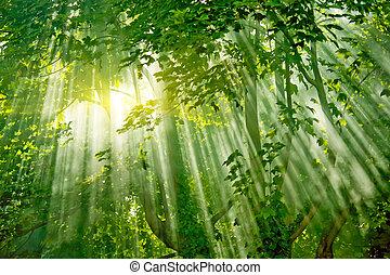лес, sunlights, магия