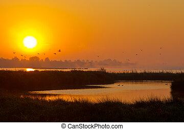 летающий, озеро, восход, birds
