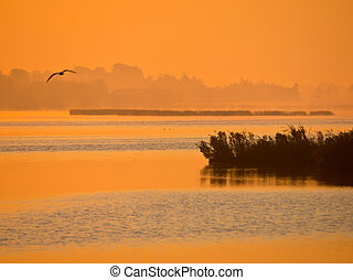летающий, озеро, оранжевый, птица, восход, свечение