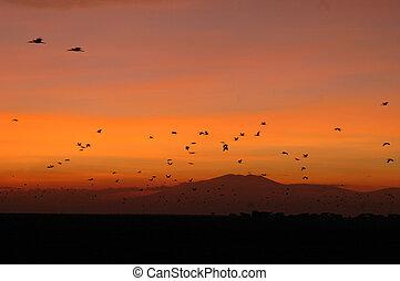 летающий, birds, восход