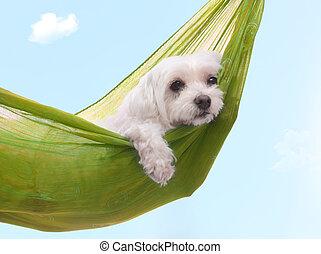 лето, ленивый, собака, dazy, days