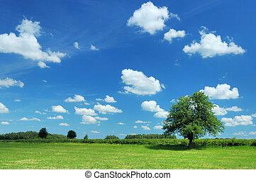 лето, пейзаж