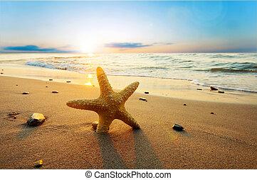 лето, пляж, солнечно, морская звезда