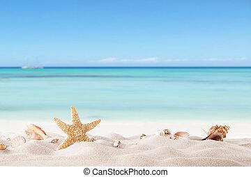 лето, пляж, strafish, ракушки