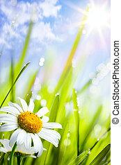 лето, трава, натуральный, задний план, цветы, daisies
