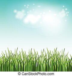 лето, цветы, иллюстрация, поле, вектор, зеленый, трава