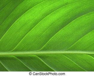 лист, крупным планом, зеленый