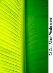 лист, пальма, дерево