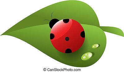 лист, роса, божья коровка, зеленый, красный, пятнистый