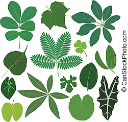 лист, leaves, растение, тропический