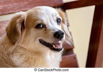 лицо, внутренний, собака