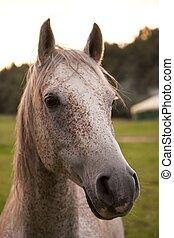 лошадь, глава