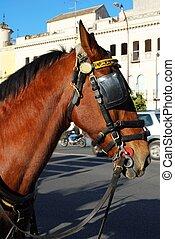 лошадь, глава, seville., уздечка