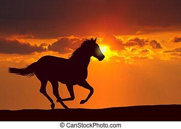 лошадь, закат солнца, бег
