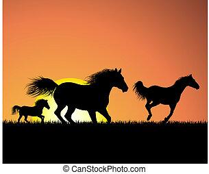 лошадь, закат солнца, задний план