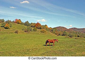 лошадь, луг