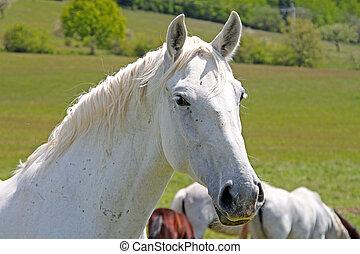 лошадь, отдых