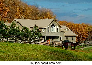 лошадь, ранчо