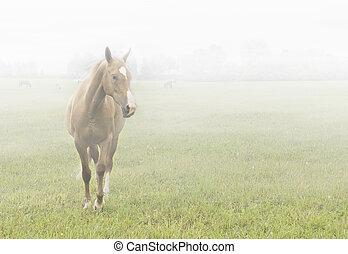 лошадь, туман