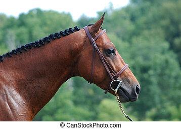 лошадь, уздечка, глава, показать