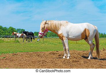 лошадь, bridle., пространство, text., красный, ваш