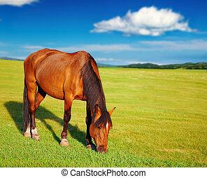 лошадь, grazing