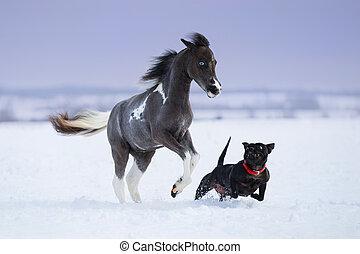 лошадь, playing, зима, собака