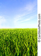 луг, синий, небо, трава, clouds, зеленый