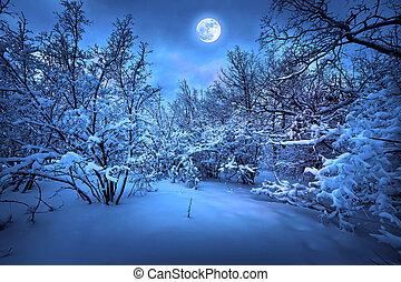 лунный свет, дерево, зима, ночь