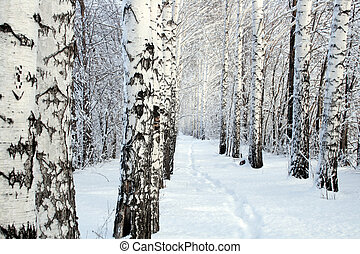 маленький, дорожка, дерево, зима, береза