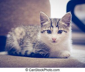 маленький, sofa., лежащий, котенок