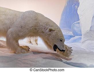 мама, медведь, полярный